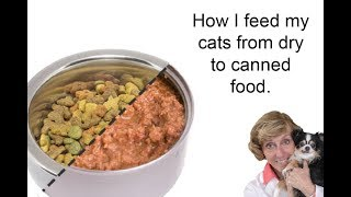 How I feed my cats. From dry to canned cat food. Paw Corner Episode 3