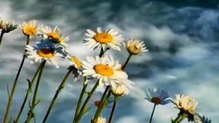 Chopin -- Nocturne  Op.55 No.1 (Arthur Rubinstein )