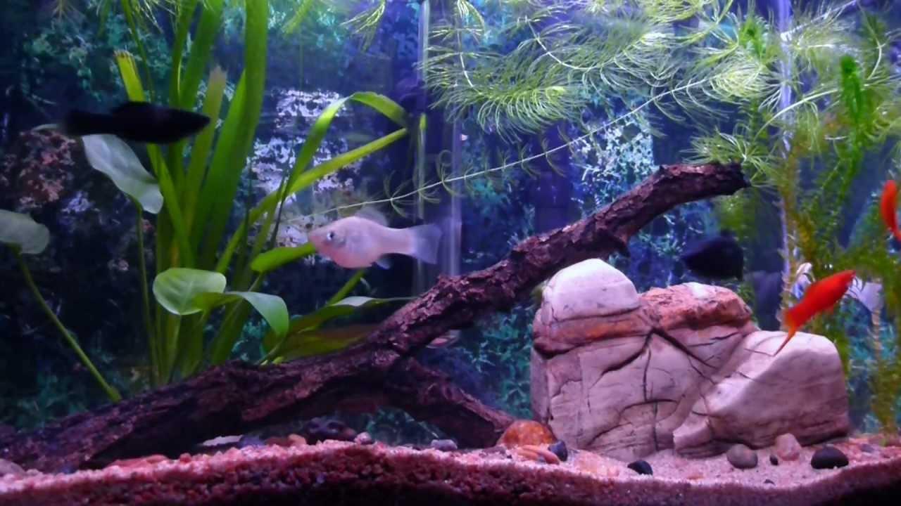 кинематографе лучшие аквариум с моллинезиями фото нижних углов