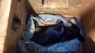 Индивидуальная кремация собаки Москва