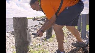 USGS Storm Tide Sensors: Measuring Coastal Storm Tide and Flooding