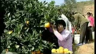 China 30 years: Rural reform