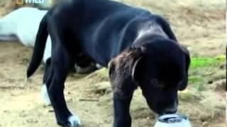 Моя собака съела это - часть 1