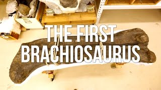 The First Brachiosaurus