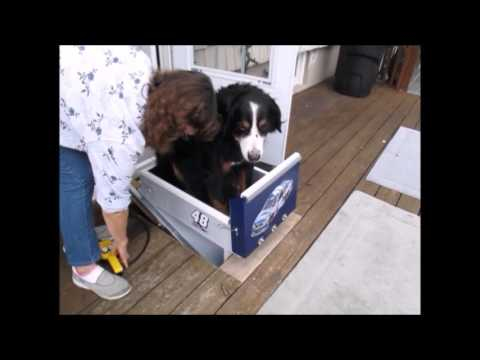 Dog Stair Lift Youtube