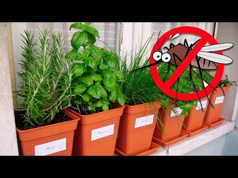7 Plants That Repel Mosquitoes and Other Insects