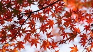 東京 京都 紅葉 日本之秋 2010
