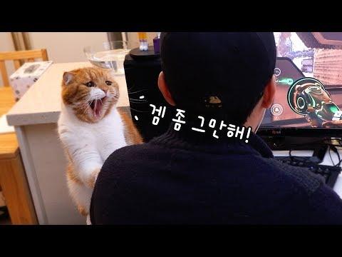 주인이 게임 할때 방해하는 고양이들 -귀욤-