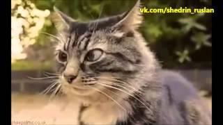 Джентльмены удачи   Евгений Леонов кот