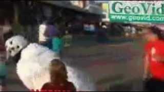 Sokakta deli gibi hareketleri var :D / www.crozers.com