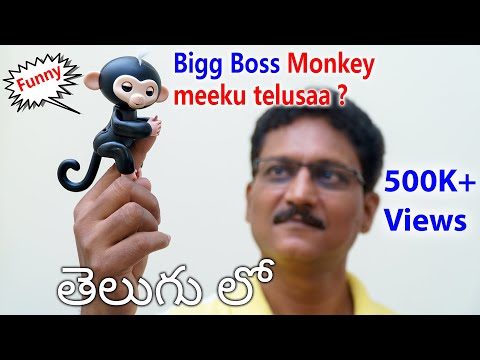 Bigg Boss Monkey Meeku Telusaa... ??