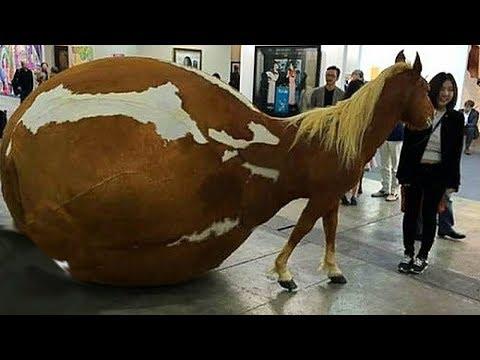 Dünya'nın En Pahalı 10 At Irkı