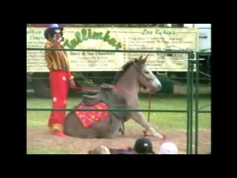 Animal Wranglers Horse Circus Tricks   Part 1