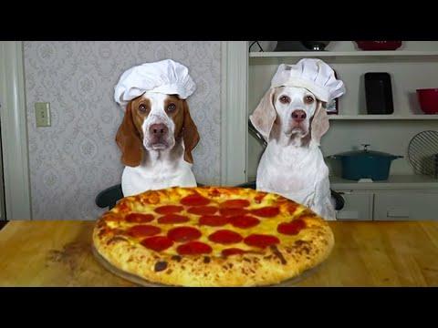 Dogs Make Pizza: Funny Chef Dog Maymo & Potpie Cook Pizza!
