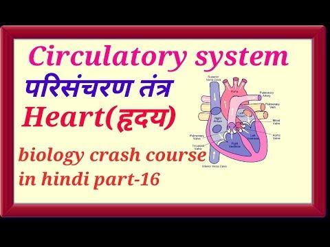HUMAN HEART(ह्रदय) circulatory system in hindi