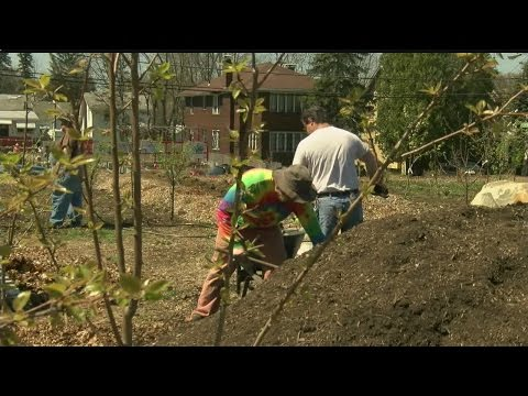 YSU students plant food forest on Youngstown's south side