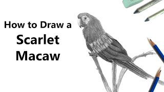 How to Draw a Scarlet Macaw with Pencil [Time Lapse]