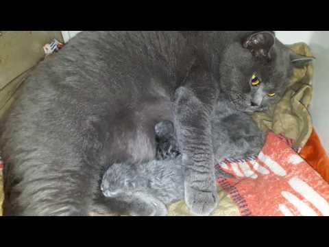 Роды нашей кошки 2 часть сюрприз еще1котенок