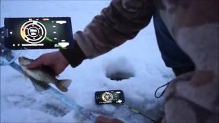 видео Лучший бюджетный эхолот для зимней подлёдной рыбалки
