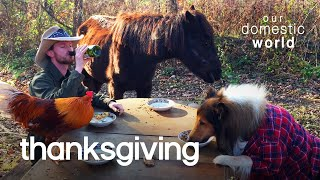 Pets Celebrate Thanksgiving  | Our Domestic World
