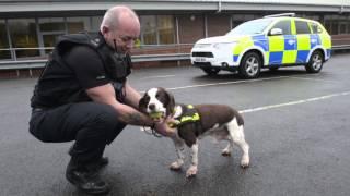 UK's longest serving police dog retires at 13