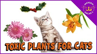 Plants That Are Toxic to Cats!!