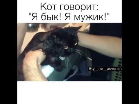 Видео кот кричит я бык