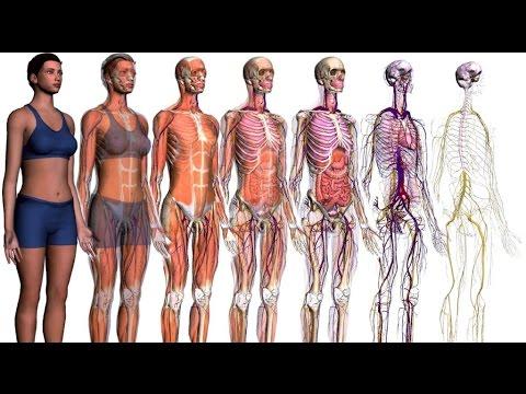 Sistemas del cuerpo humano - Biología - YouTube