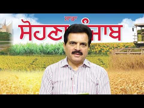 Sadda SOHNA Punjab Episode 27 - Markfed to enter the calf starter feed market