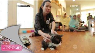 Kucing Ponco Playground - Weekend List
