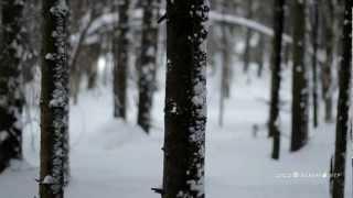 Тест Canon 600D 50mm f1.8.m2t Видео(canon 600D видео. Съемка в пасмурную погоду и в темное время суток., 2012-02-26T05:36:21.000Z)
