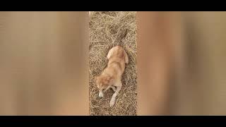 Что случилось с собакой shorts короткие видео