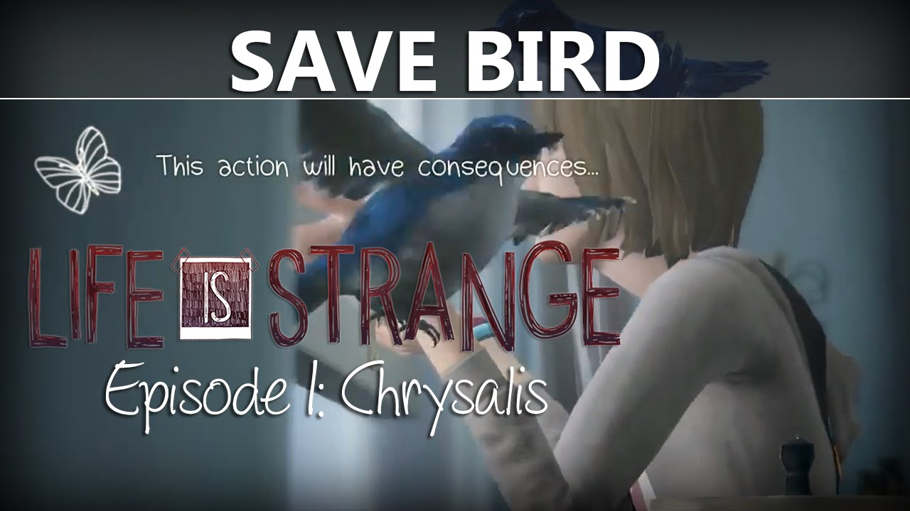 Life Is Strange Episode  Save The Bird Where How To Chrysalis Youtube