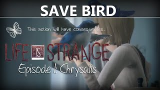Life Is Strange Episode 1 SAVE THE BIRD Where/How To | Chrysalis