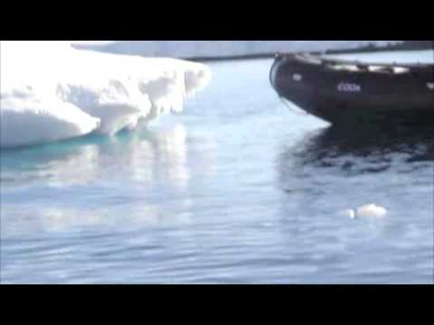 Leopard seal attacks boat