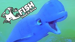 Feed and Grow Fish Gameplay German - Gigantischer Beluga