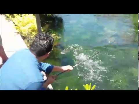 Testeo del pejebaits en estanque de truchas youtube for Estanque de truchas