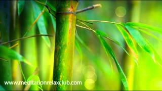 Zen Buddhist Meditation Music (Flute, Relaxing Music and Sounds of Nature)