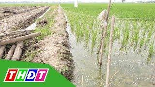Bất chấp nguy hiểm, nông dân vẫn dùng điện bẫy chuột | THDT