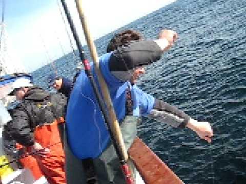 Miss montauk cod fishing youtube for Miss montauk fishing report