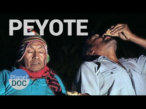 Peyote, The San Pedro Cactus. The Forerunners Of The Inca | History - Planet Doc Full Documentaries