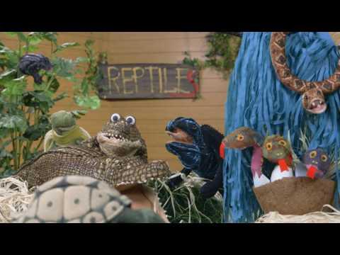 Classification: Camp Vertebrate - Music Video Of Amphibians, Fish, Birds, Reptiles, And Mammals!