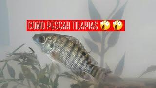 COMO PESCAR FILHOTES DE TILAPIA COM MASSA
