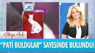 Pati Buldular sayesinde 2 kayıp kedimiz bulundu! - Müge Anlı ile Tatlı Sert 12 Eylül 2017 HD