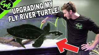 UPGRADING MY FLY RIVER TURTLES TANK!(Ft.JOEY SLAY EM)