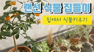 워니트리는 어떤 식물을 키우고 있을까요? | 실내 식물…