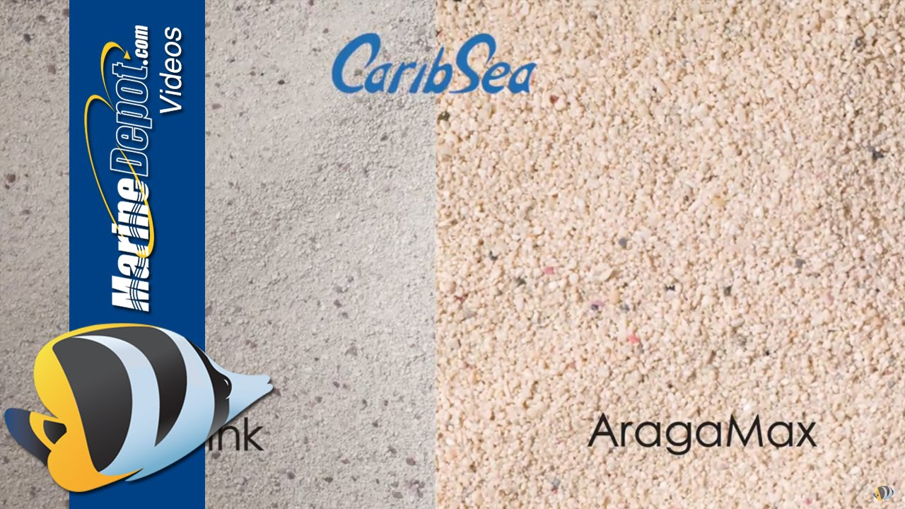 Aquarium Sand Deep Bed Or Shallow Co Fine Find Out You