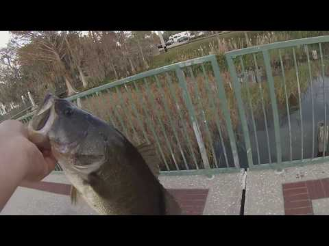 BIG BASS CAUGHT AT LAKE EUSTIS, FLORIDA