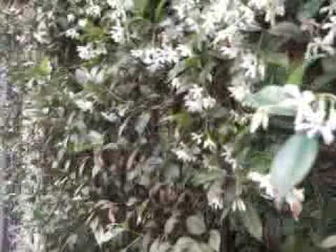 Video by Samsung Corby Wi-Fi M5650 (per confronto con linea Corby)