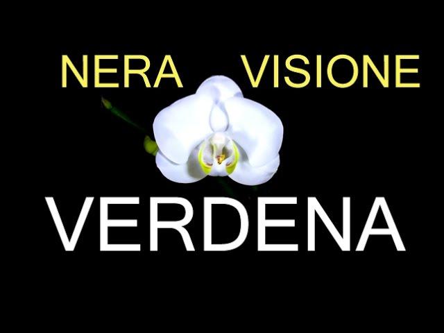 verdena-nera-visione-video-testaroli